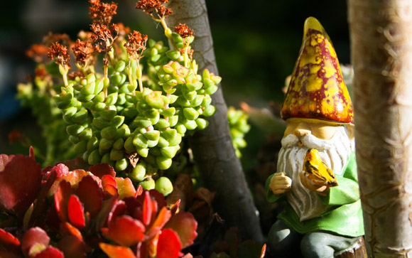 Canary Gnome