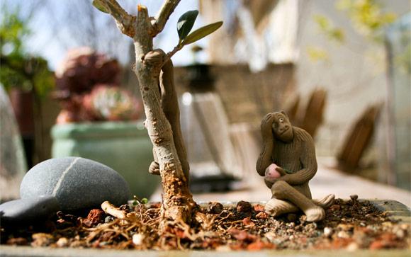 Bonzai Olive Tree Monkey