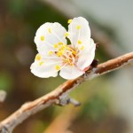 Spring Fruit Flowers