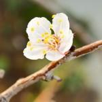 Spring Fruit Flowers