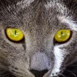 Jäger's Green Eyes