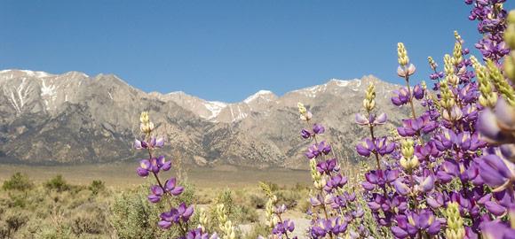 Mountain view from Wild Wild West Marathon trail!