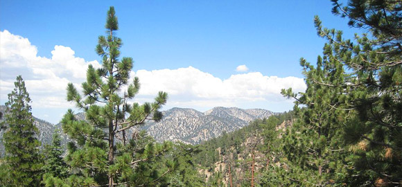Angeles Forest Mountains
