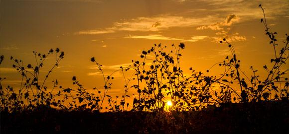Hauli Sunset