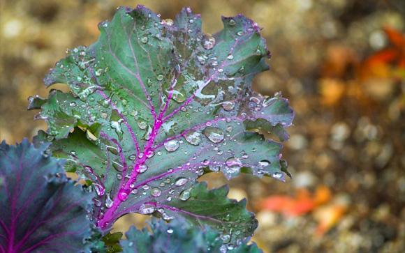 November Rain Greens