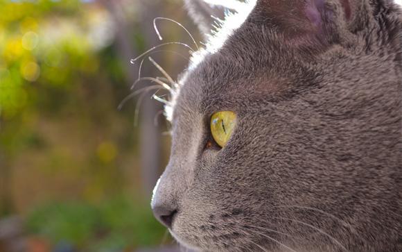 Jäger's Profile