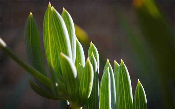 succulent-sunlight-glow