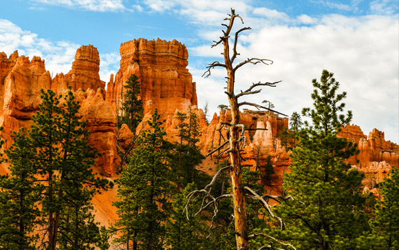 Bryce Canyon Up Close 01
