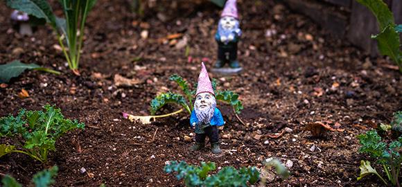 Gnomes N' Kale